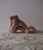 人体解剖模型 le pied 足