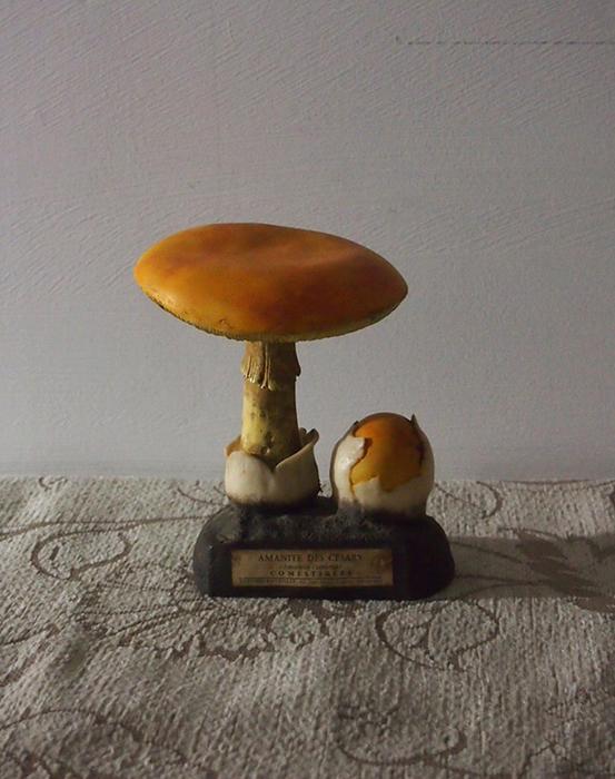 古いキノコの模型 21 Amanite des césars