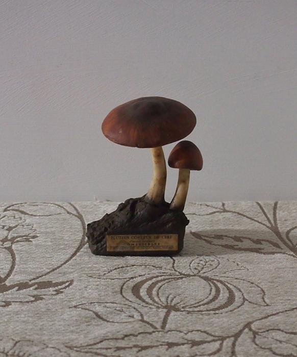古いキノコの模型 22 Pluteus couleur de cerf