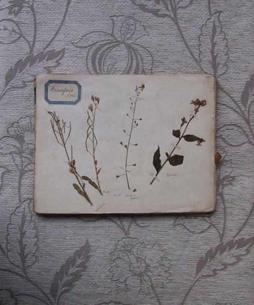 古い押し花帳 9