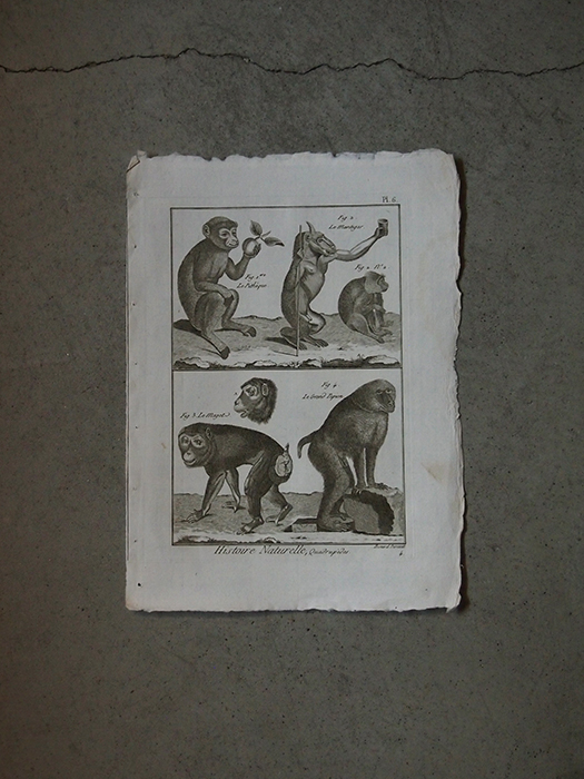 猿の版画 3