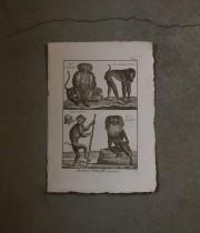 猿の版画 5