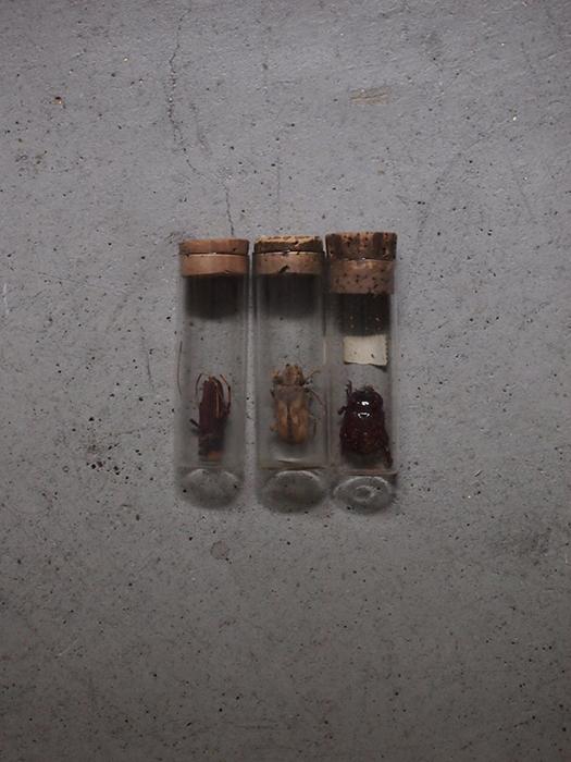 試験管に入った虫の標本3本