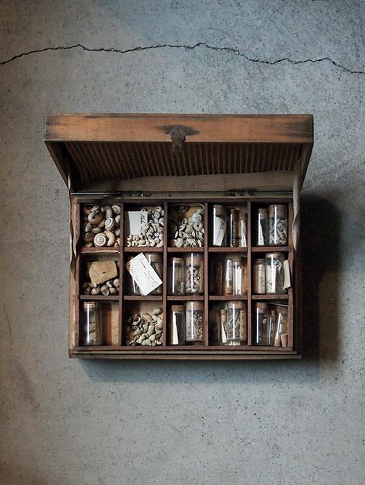 巻貝がいっぱい入った標本箱