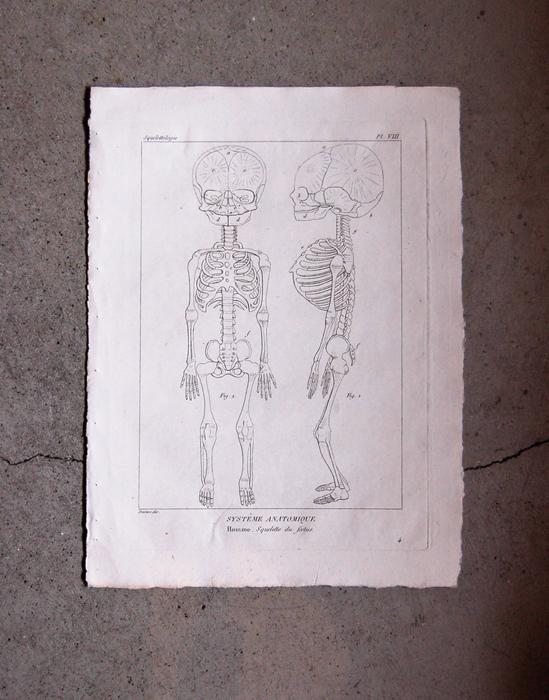 骨格版画 2