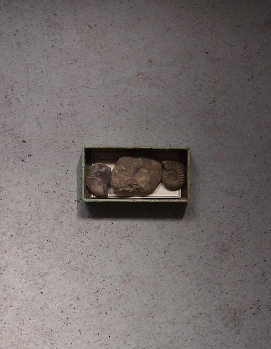 巻貝の化石 1