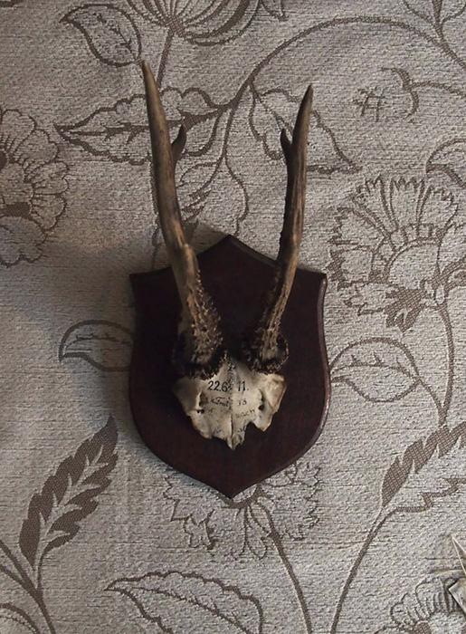 骨のオブジェ