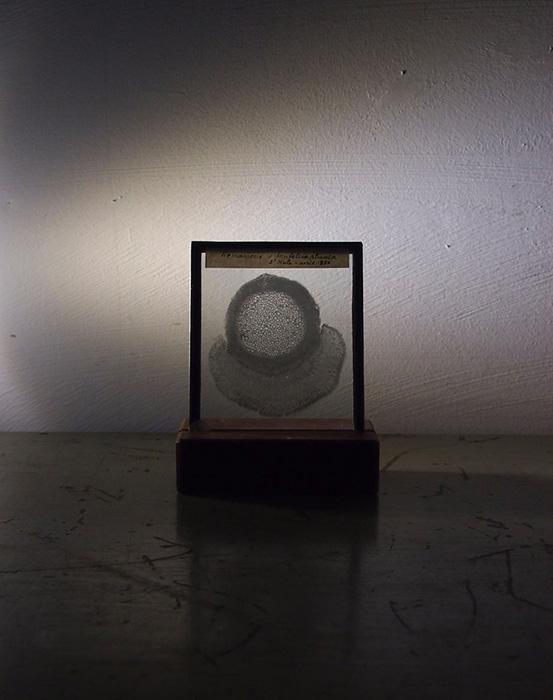 植物学のガラス・フィルム 3