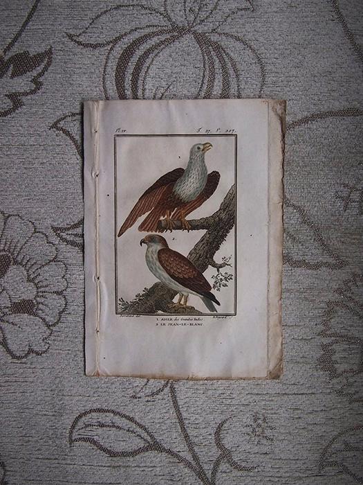 鳥の版画 2