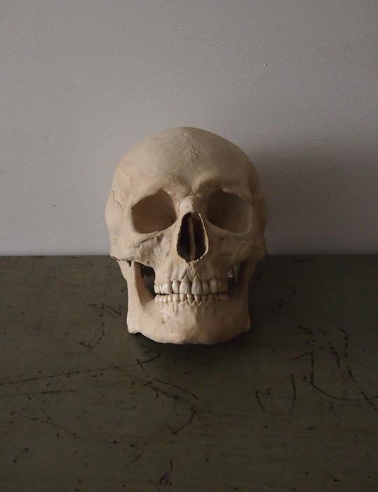 頭蓋骨の模型 Crâne