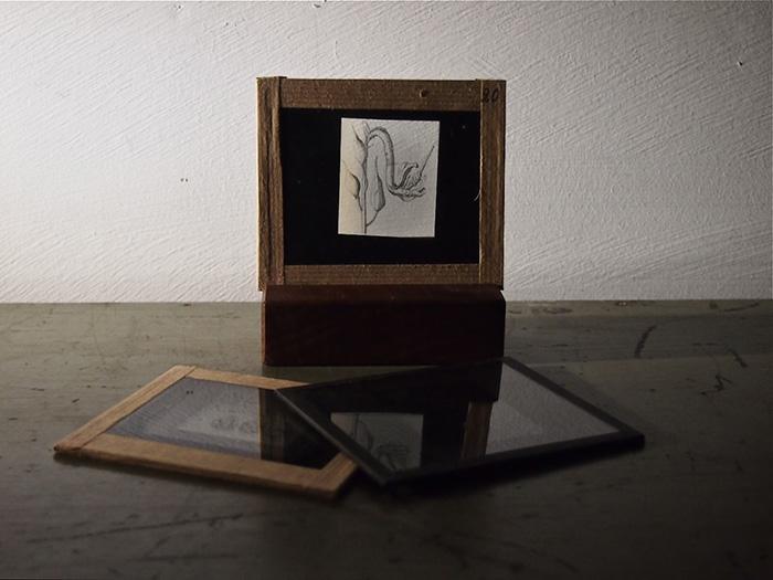 植物のガラス・フィルム 3枚