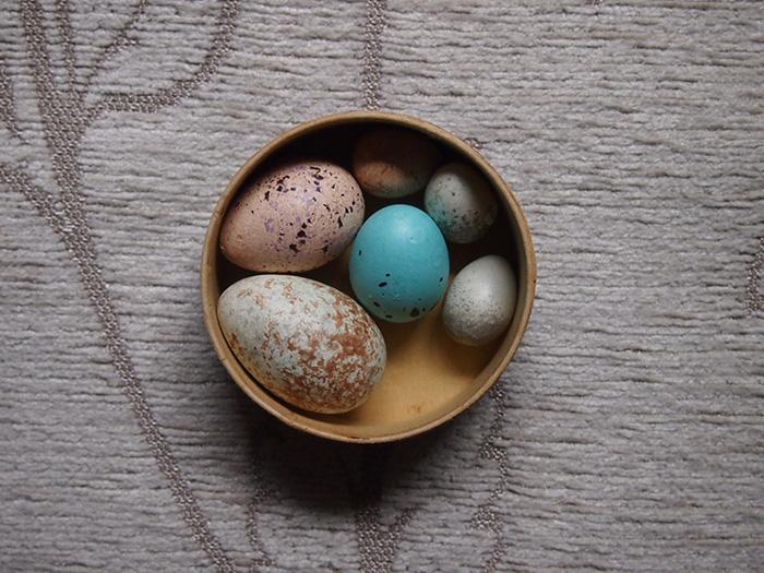 疑似卵 6個