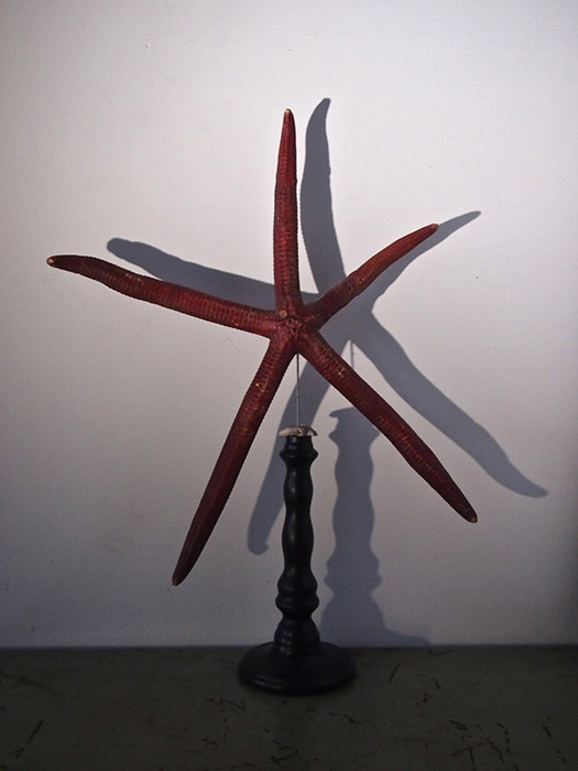 大きなヒトデのオーナメント étoile de mer