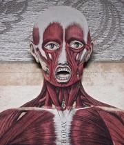 人体解剖図 ANATOMIE ICONOCLASTIQUE 2