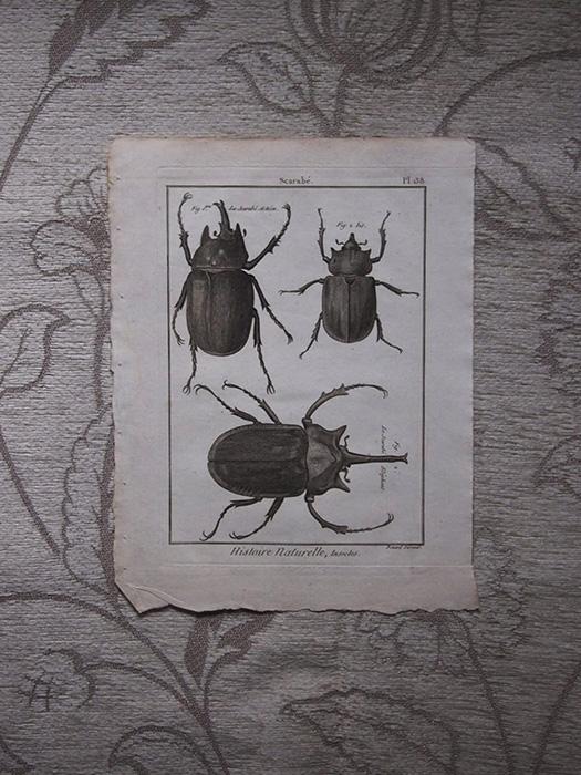 虫の版画 1 Scarabé