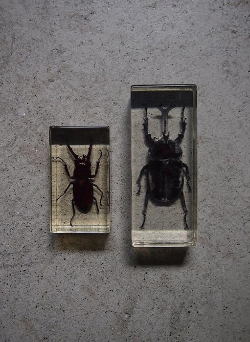 昆虫のアクリル標本 1
