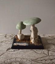 キノコの模型 26 Aminite Phalloide