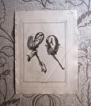 18世紀の胎児出産版画 1