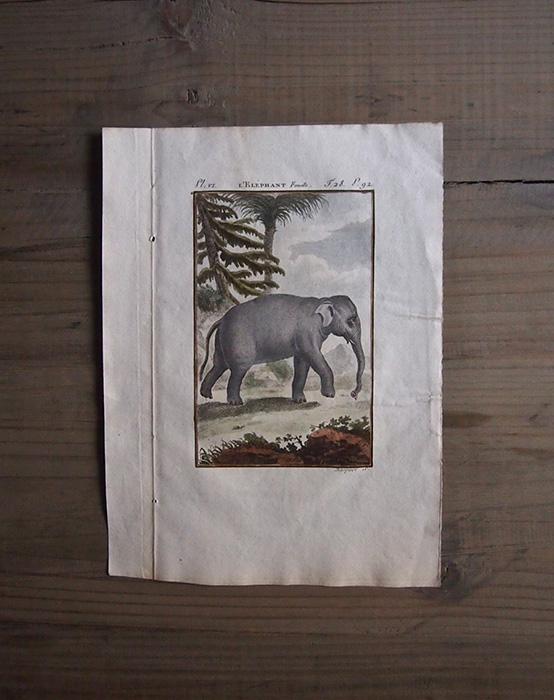 18世紀の動物版画 Eléphant
