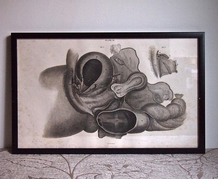 人体解剖図 Astley Cooper 3