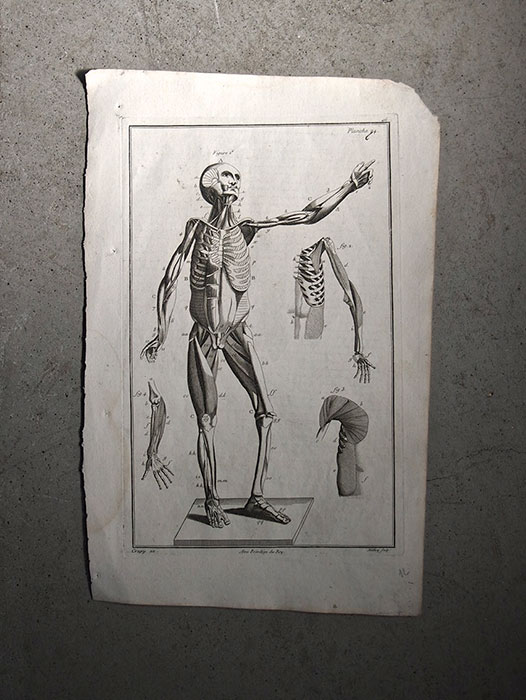 Une anatomie 人体解剖図 筋肉 1