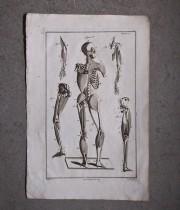 Une anatomie 人体解剖図 筋肉 2