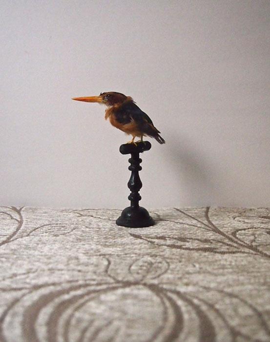 鳥の剥製 24 Martin-pêcheur