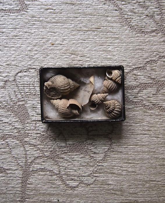 貝の化石の標本 1 Fossil des coquillages