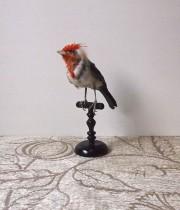 鳥の剥製 29  Cardinals