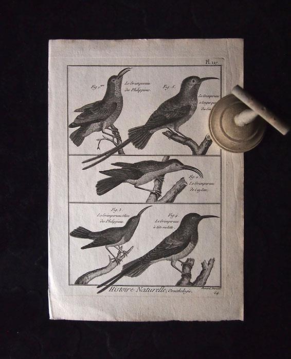 博物館の止まり木と鳥の博物画 2