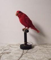 鳥の剥製 31   Perruche rose