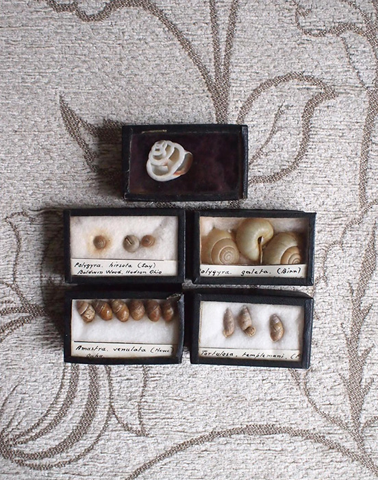 貝の標本5個セット