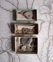 改装前セールサービス品 貝の化石3個セット 1