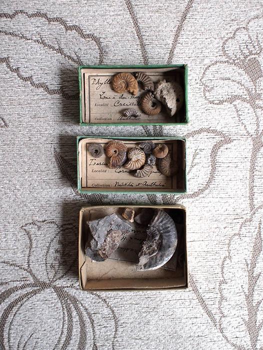 改装前セールサービス品 貝の化石3個セット 2