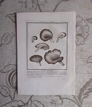キノコの版画 20  L'agaric Petalolde
