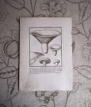 キノコの版画 18  L'agaric Laiteux Âcre