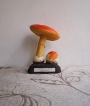 キノコの模型 35 Amanite des césars