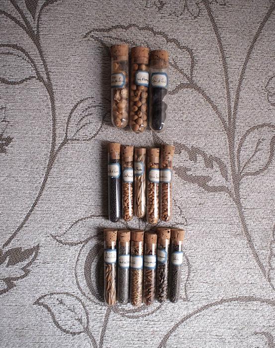 穀物の種標本14本