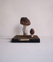 キノコの模型 43  Smaž jadlý