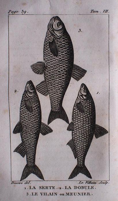 Buffon Histoire Naturelle  poisson tome VII