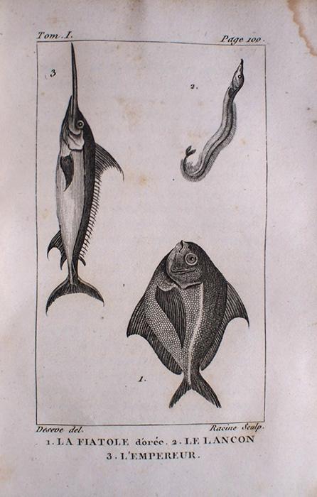 Buffon Histoire Naturelle  poisson tome premier