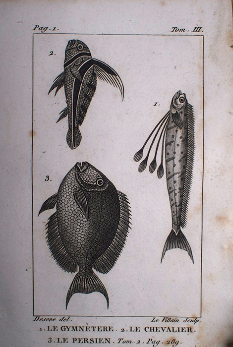 Buffon Histoire Naturelle  poisson tome III