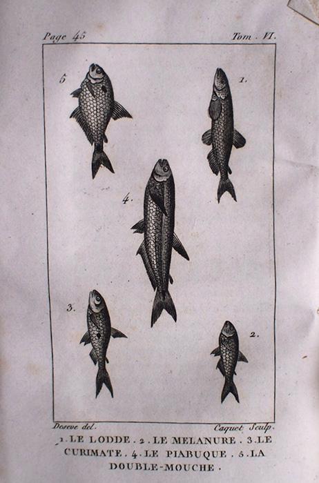 Buffon Histoire Naturelle  poisson tome VI