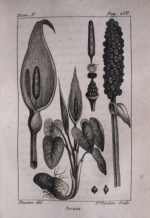 Buffon Histoire Naturelle  végétaux tome V