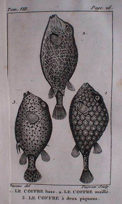 Buffon Histoire Naturelle  poisson tome VIII