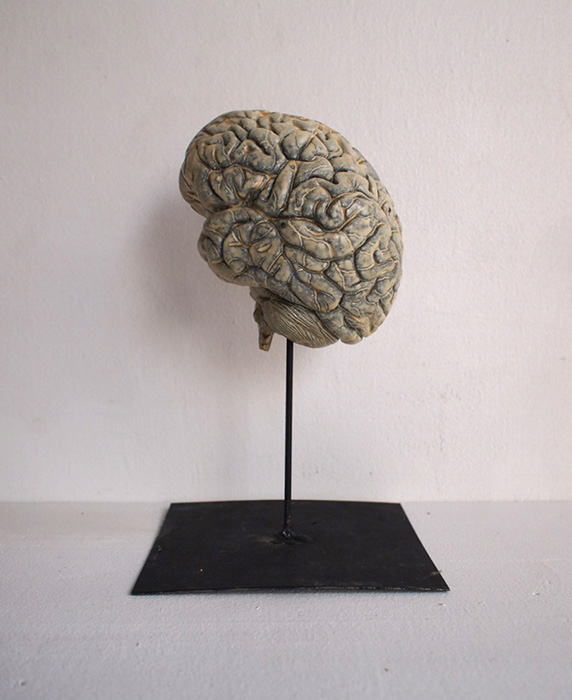 人体解剖模型 cerveau 脳