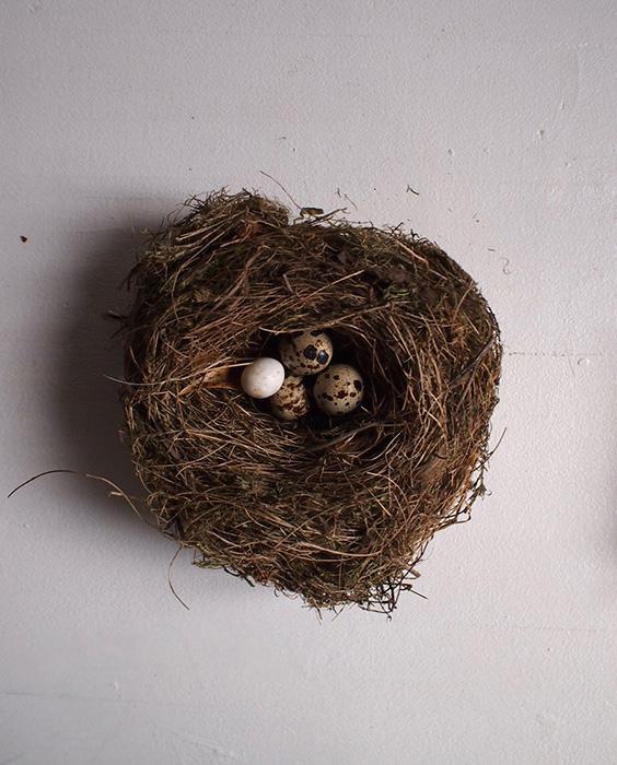 鳥の巣 2