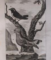 Buffon Histoire Naturelle oiseaux tome XIV