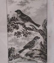 Buffon Histoire Naturelle oiseaux tome XIII