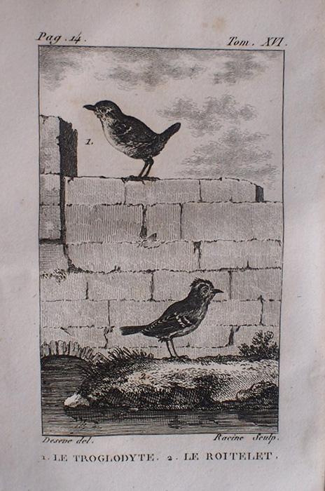Buffon Histoire Naturelle oiseaux tome XVI